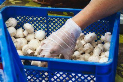 Mushroom Workers